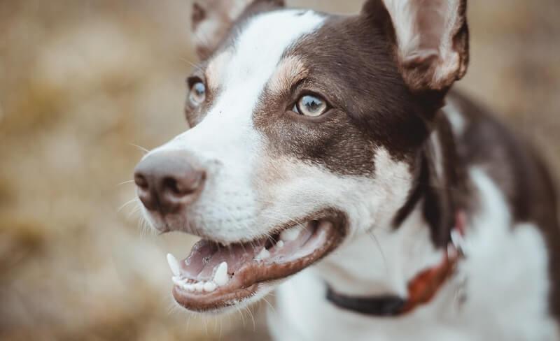 Hund Zähneputzen gewöhnen