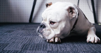 Hund alleine lassen Ratgeber Tipps