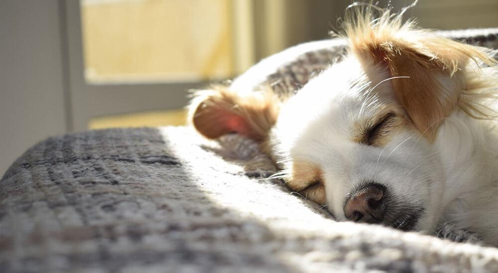 Hund einschläfern lassen Ratgeber