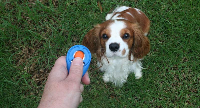 Hunde Clicker-Training