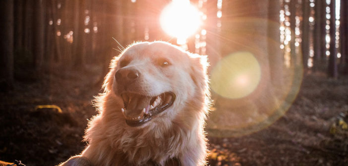 Hunde Fell- und Pfotenpflege im Sommer