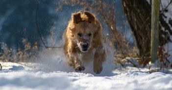 Hunde Fell- und Pfotenpflege im Winter