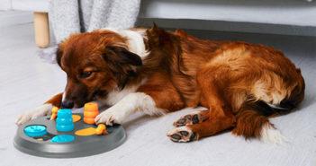 Hunde Intelligenzspielzeug Test