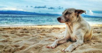 Hunde Krankheiten im Alter
