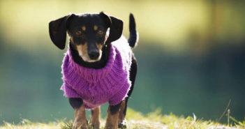 Hundekleidung Ratgeber