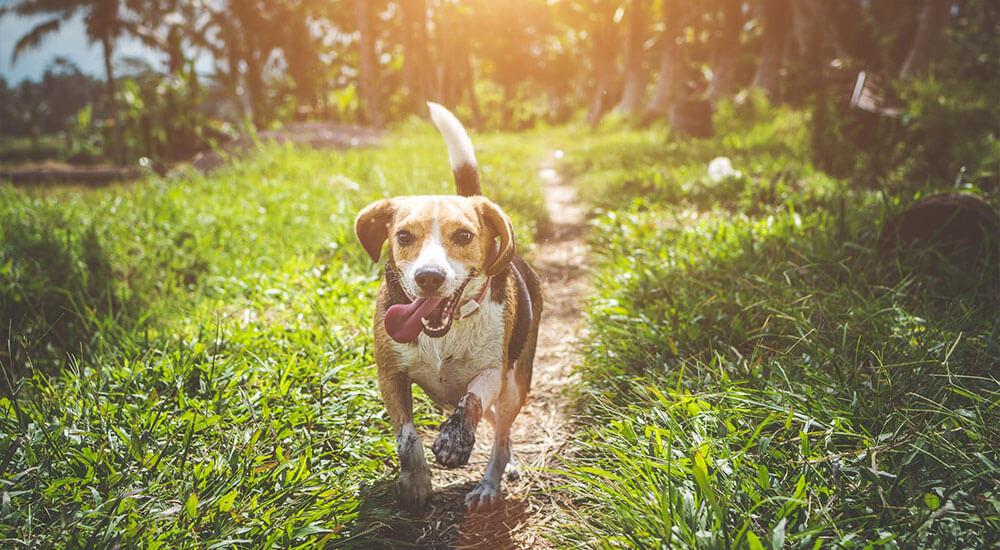 Hundekrankheiten Ratgeber