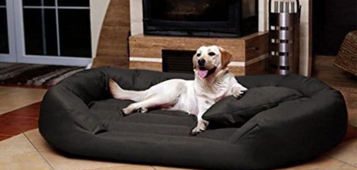 Hundesofa XXL Test