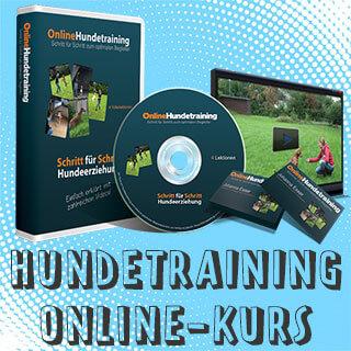 Hundetraining Onlinekurs