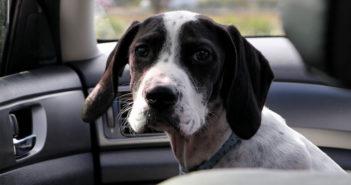 Hundetransport im Auto Ratgeber Tipps