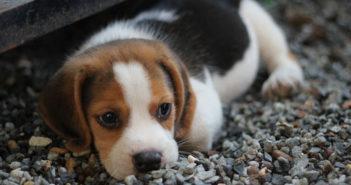 Hundevergiftung Ratgeber