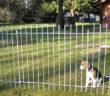 Hundezaun Test und Ratgeber