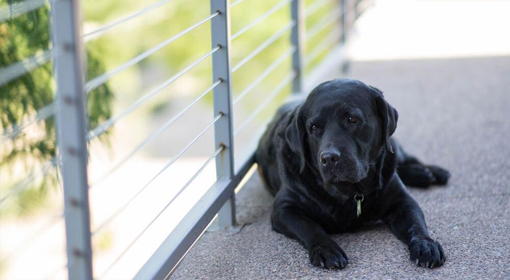 Inkontinenz beim Hund Ratgeber Tipps