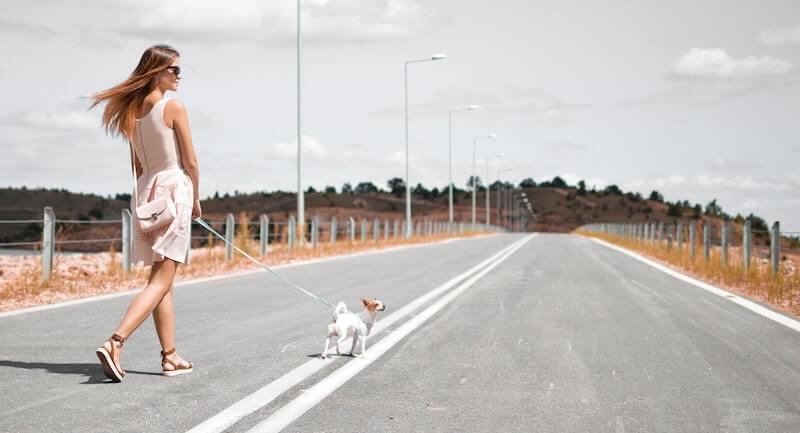 Joggen mit Hund Ausrüstung