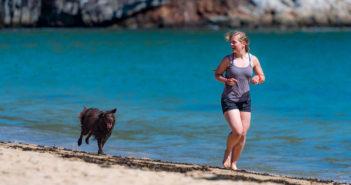 Joggen mit Hund Ratgeber und Tipps