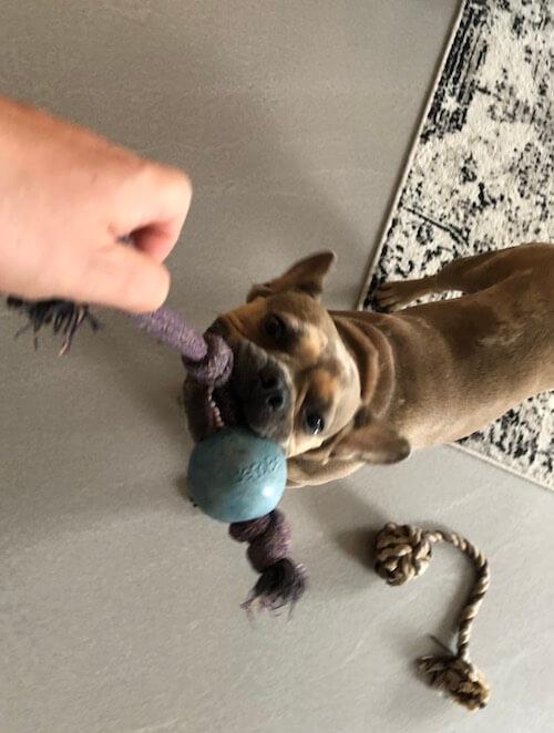 Nützliches Hundespielzeug