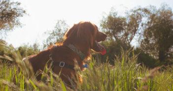 Warum fressen Hunde Kot Ratgeber