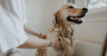 Wellness für Hunde Ratgeber