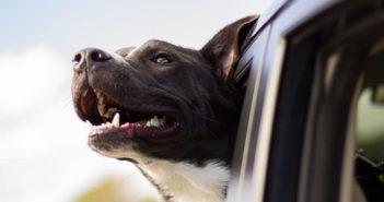 Zahngesundheit beim Hund Ratgeber