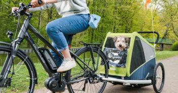 Fahrradanhänger für Hunde Test