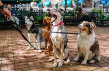 Hunde bellen abgewöhnen Ratgeber