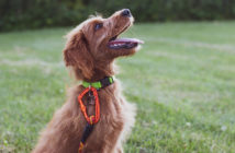Hundekommandos richtig geben