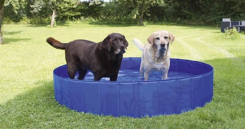 Hundepool Ratgeber