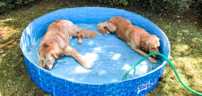 Hundepool Test