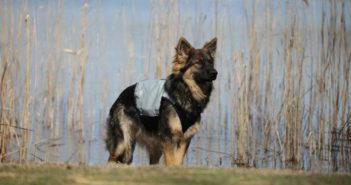 Kühlwesten für Hunde Test