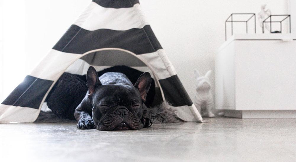 Schlafverhalten Hund Ratgeber