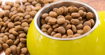 Trockenfutter für Hunde mit Gelenkproblemen