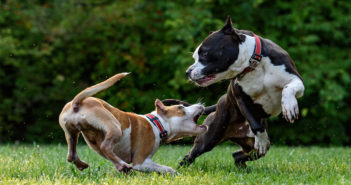 Aggressiver Hund Ratgeber