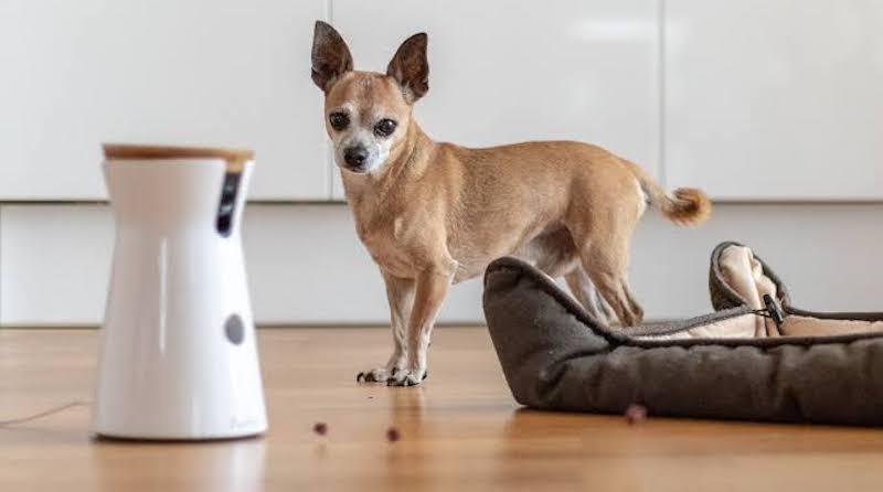 Kameras für Hundeüberwachung Test