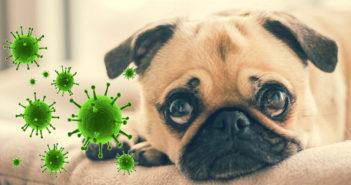 Hund und Coronavirus Ratgeber