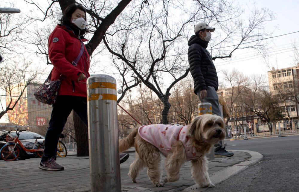 Mit Hund während Quarantäne spazieren gehen