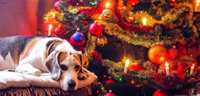 Weihnachtsgeschenke für Hundeliebhaber und Hunde